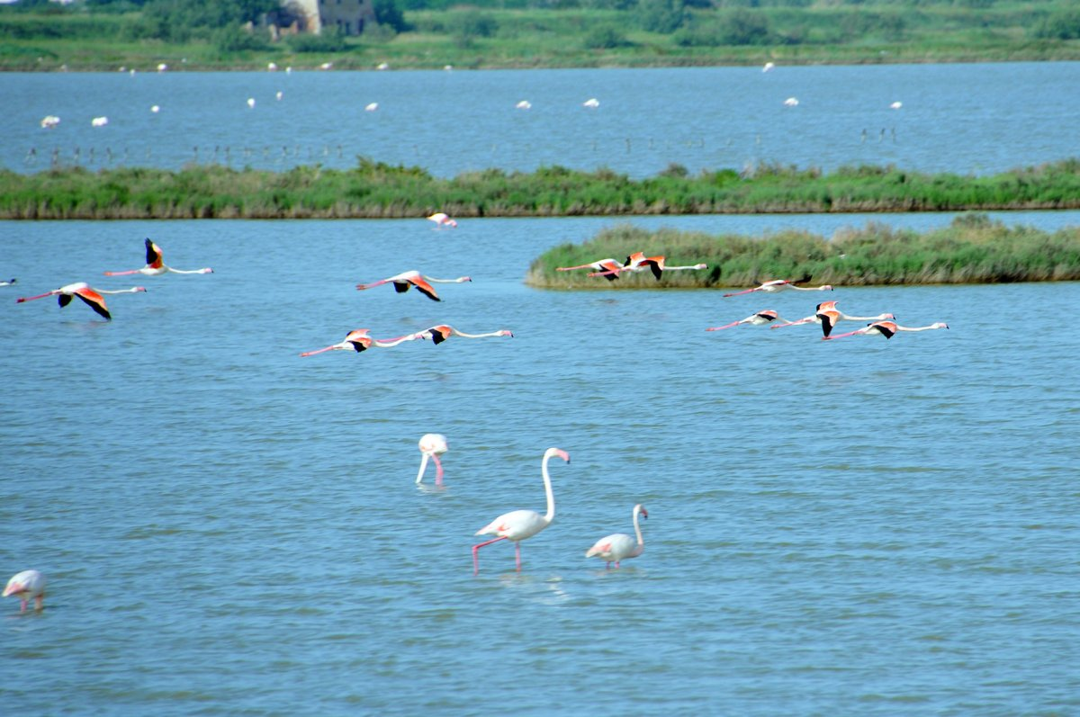 Private birding tour in the Po Delta Park